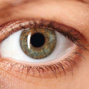 A importância do nervo óptico para a visão